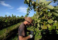 Лозарите и винарите со преговори за откупната цена
