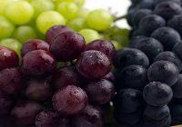 Винариите го откупуваат грозјето во Повардарието – Лозарите ја добиваат првата рата