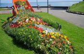 """""""Истурени"""" цвеќиња внесуваат живописност во обичните градини"""