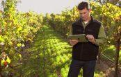 Оглас за подигнати повеќегодишни овошни и лозови насади