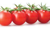 """Одгледување на """"cherry"""" домати"""