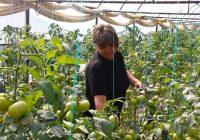 Нов циклус обуки за земјоделците од струмичкиот и радовишкиот регион – кандидати за грантови за воведување на агроеколошки мерки