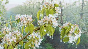 Николовски: Наскоро исплата на штетите од пролетните мразови во 2016. И 2017 година