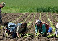 Платежната агенција ќе биде подостапна за земјоделците