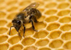 Пчеларите очекуваат добра година