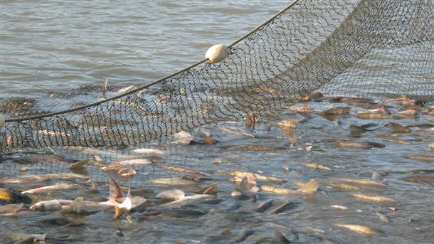 ribarski-mrezi