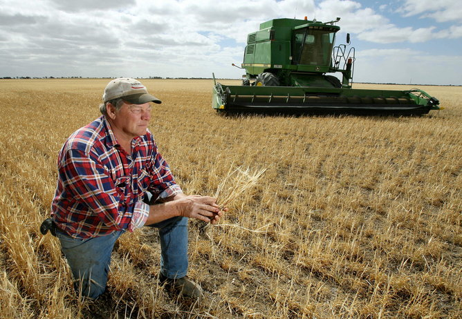 TO GO WITH Inflation-poverty-food-Asia by Lawrence Bartlett (FILES) This file photo taken on November 14, 2006 shows farmer Marshall Rodda inspecting his stunted wheat stalks, normally thigh high, and which have only managed only a few inches growth in the parched earth of the Australian wheat belt area of Wimmera, northwest of Melbourne. From the rice paddies of Asia to the wheat fields of Australia, the soaring price of food is breaking the budgets of the poor and raising the spectres of hunger and unrest, experts warn. In Australia, which usually ranks second after the United States as a global wheat exporter, several years of drought cut harvests to just 13 million tonnes last year from an average of 22 million tonnes. AFP PHOTO / FILES / William WEST