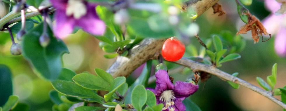 drzhavni nivi za sadenje na paulovnija godzi leshnici no i za selski turizam