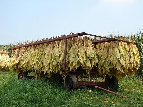 se dogovara novoto proizvodstvo na tutun