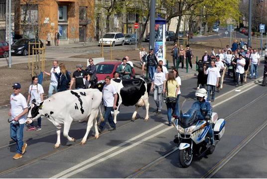protest na ungarski stochari vo centarot na budimpeshta