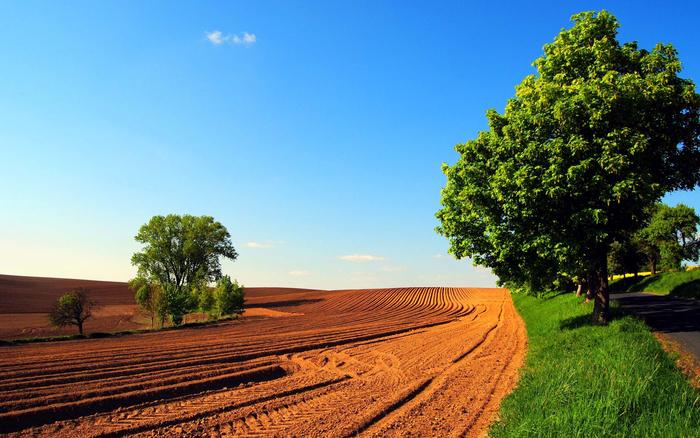 godinava izvrsheni 441 inspekciski nadzor vrz osnova na zakonot za zemjodelsko zemjishte