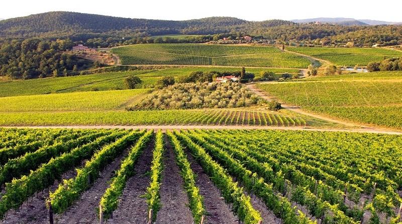 se razviva vinskiot turizam
