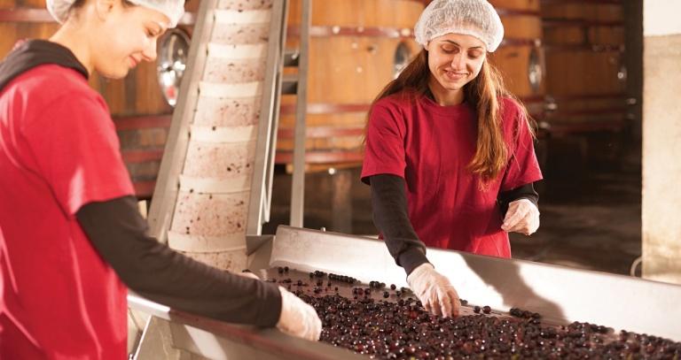 za da se proizvede vino so visoka vrednost za zdravjeto neophodni se vrvna tehnologija i znaenje