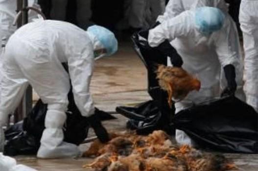 na makedonija i se priblizhuva opasniot ptichji grip