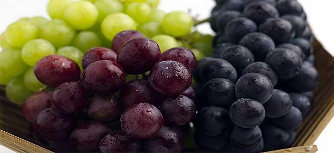 vinariite go otkupuvaat grozjeto vo povardarieto lozarite ja dobivaat prvata rata