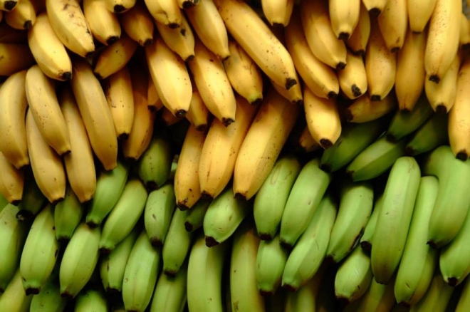 jadete banani dodeka ushte gi ima