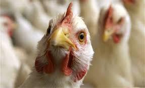 vo hrvatska e registriran ptichji grip