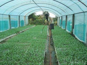 rastitelno proizvodstvo